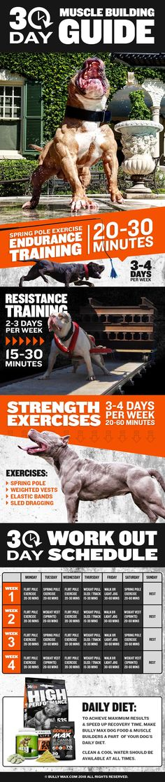 ecaf6332fdc0e 30 Day Muscle Building Guide for Dogs (Schedule included) -