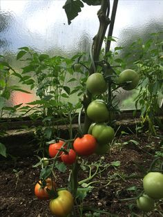 Vegetables, Food, Vegetable Recipes, Eten, Veggie Food, Meals, Veggies, Diet