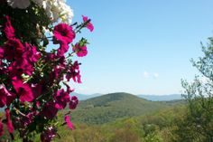 Spring and flowers at the Beech Mountain Club