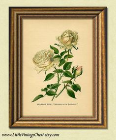 Black Friday! Buy 1 Get 2! - BOURBON ROSE  Antique Botanical Art Print  by littlevintagechest, $7.00