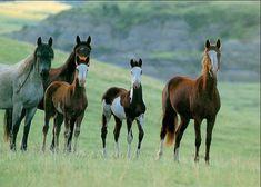 colorado mustang horses | Hoy en día se conoce al Mustang como la última especie de caballos ...