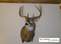 Iron Buck On The Wall