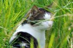 Photography post on my blog. Including lovely pictures of nature. Bee, flower, grass, cat, kitten, butterfly. Macro lens