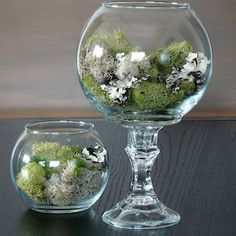 Dollar Tree Crafts - DIY Dollar Store Terrarium - DIY Ideas and Crafts Projects From Dollar Tree Stores - Easy Organizing Project Tutorials and Home Decorations- Cheap Crafts to Make and Sell Dollar Store Hacks, Dollar Tree Store, Dollar Stores, Dollar Tree Decor, Dollar Tree Crafts, Dollar Tree Vases, Terrarium Diy, Decoration Plante, Decoration Table