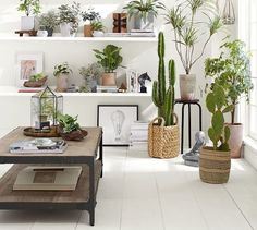 Living Room Decoration With Plants Ideas You'll Like; Living Room Decoration With Plants; Plants In Living Room; Living Room With Plants Deocr; Room With Plants, House Plants, Indoor Garden, Indoor Plants, Potted Plants, Fern Houseplant, Metal Wood Coffee Table, Decoration Inspiration, Interior Inspiration