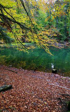 Free Photos, Poland, Nature Photography, Mountains, Travel, Viajes, Trips, Wildlife Photography, Traveling