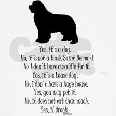 The things you get asked all the time when you have a Newfy!