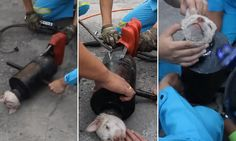 Heartwarming moment puppy is rescued from pipe