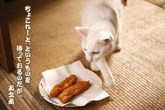 Twitter / nekozamuraiinfo: 玉之丞さま、お江戸はホワイトバレンタインでございますね。寒いゆえみなさまもお風邪など召しませんよう。 #猫侍 Neko, Adorable Animals, Funny Cats, Kittens, Kitty Cats, Funny Kitties, Kitten, Baby Cats, Cute Cats