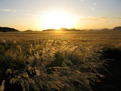 Setting sun shining through the unusually long grass at Desert Homestead, Namibia. The long grass is the result of heavy rains in the area.
