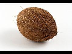 Como germinar un coco de supermercado. Cocos nucifera