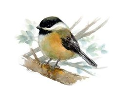 Original Watercolor Bird Art Bird Illustration Animal Nursery Art Hand Painted Bird painting 6x8 Chickadee by NuFineArt5 on Etsy https://www.etsy.com/listing/230553659/original-watercolor-bird-art-bird