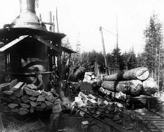 a donkey engine used in Ravensdale.  Look how nicely cut their wood fuel was.  Spar tree in the background.