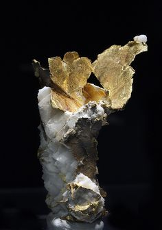 Gold in Quartz. Motherlode Belt. California
