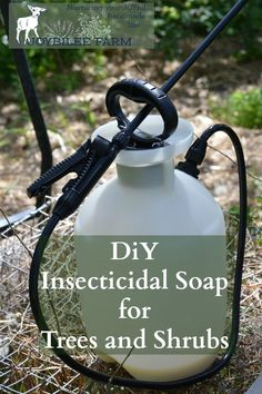 This insecticidal soap spray can be made at home for only a few dollars. It kills garden pests by coating their bodies with oil. Since insects breathe through their skin, it smothers them. Then the oil stays on the leaves making them inhospitable to further predation. But it won't harm pets or humans. Avoid spraying on fruit shrubs with open flowers and pollinators at work. This can be used on fruit trees, shrubs, canes, and vines. Avoid spraying on the vegetable garden, as the oil w...: