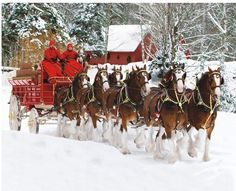 Budweiser Clydesdales In The Snow Big Horses, Pretty Horses, Horse Love, Beautiful Horses, Animals Beautiful, Cute Animals, Christmas Horses, Christmas Animals, Christmas Lodge