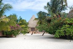 Matachica Beach Resort - San Pedro, Ambergris Caye in Belize >> Loved Belize, would be ecstatic to go back and stay here, this place looks perfect!