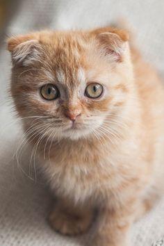 Beautiful Ginger baby...