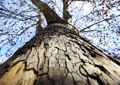 Basework - Scapes Incorporated http://www.scapesincorporated.com/services/tree-care-and-services/basework/