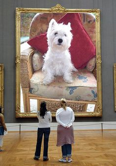 This is just so Westie attitude - of course I'm special!