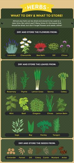 How to store dry herbs garden Creative Ways to Use The Herbs Grown in Your. - How to store dry herbs garden Creative Ways to Use The Herbs Grown in Your Garden -
