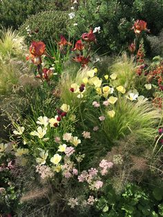 Planting on Texture garden rhsChelsea Prairie Garden, Garden Cottage, Amazing Gardens, Beautiful Gardens, Garden Design Plans, Exterior, Garden Borders, Colorful Garden, Garden Landscaping
