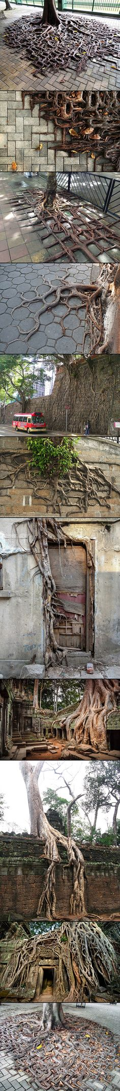 Mankind's relationship with nature is a difficult one – we must use it, live in harmony with it, protect it and protect ourselves from it. These visually striking images that we collected of tree roots colliding with concrete are beautiful symbolic representations of this complicated relationship.