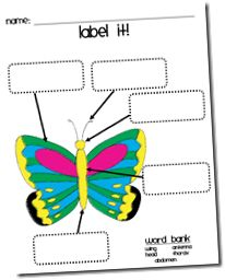 Wild about Teaching!: Caterpillar to Butterfly!