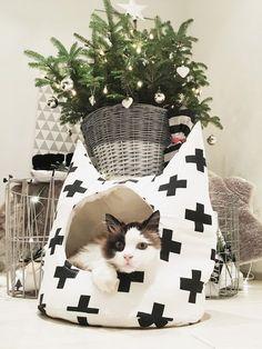 Un même genhtes cadeau de Noël de cette Année, pour Lilo. Un même genhtes cadeau de Noël de cette Année, pour Lilo. Diy Cat Bed, Cats Diy, Cute Cats And Kittens, Baby Cats, Cute Cat Memes, Cute Cat Illustration, Cute Cat Drawing, Cat Cave, Cute Cat Breeds