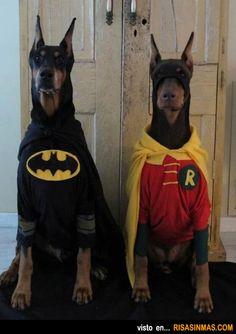 Disfraces perrunos: Batman y Robin.