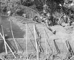 BUILDING A HUT, SHOWING THE PROCESS OF MAKING THE UPPER THIN PORTION OF THE WALL OF THE MANGBETU HUT. Locale: OKONDO'S VILLAGE, CONGO BELGE