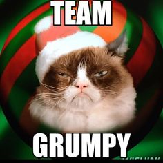 Best ideas for funny christmas quotes grinch grumpy cat Grumpy Cat Images, Grumpy Cat Meme, Grumpy Cat Quotes, Funny Cat Memes, Funny Cats, Funny Animals, Hilarious, Grumpy Kitty, Kitten Images