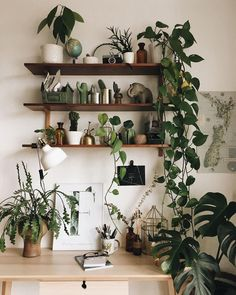 Beautiful House Plants For Decoration.To decorate your home, you must think of Simple and Beautiful House Plants Decor Ideas. House Plants Decor, Plant Decor, Plants In The House, Interior Plants, Interior Design, Interior Architecture, Balkon Design, Plant Shelves, Garden Shelves
