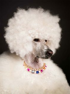 Love this dog! It has the best disco hairdo! Torkil_Gudnason_accessories_ (7)