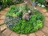 Plant circle of colorful, low growing herbs via HGTV