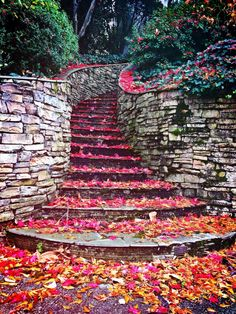 These are the steps out front of Jonathan Scott's (one of the Property Brothers) Atlanta home. Gorgeous Art by nature!
