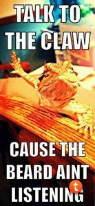 funny bearded dragon - Google Search