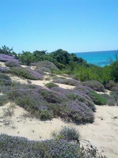 Le dune di Campomarino