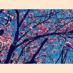 Summer is finally here! Pretty blossom tree!