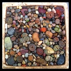 Got rocks? Got Lithops? Voila!