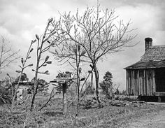 History of Bottle Trees   This picture taken by Eudora Welty.