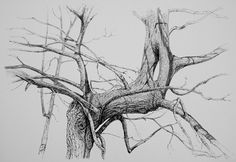 Jos van Wunnik . . drawing