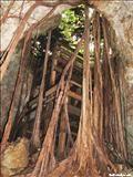 La Cueva del Viento - ZeePuertoRico.com