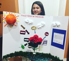 Photosynthesis 7th Grade Project Photosynthesis 3d