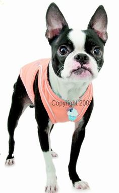 Cute dog T-shirt delightfully vibrant colors, with silver printing on back.Material: 100% cotton