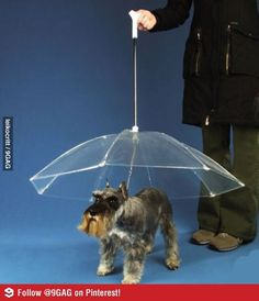 Umbrella for dogs¸.•♥•.¸¸¸ツ