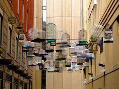 50 Forgotten Bird Songs Play in a Sydney Alley : TreeHugger
