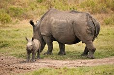 Kariega Game Reserve is holding a tribute to commemorate the death of one of three rhinos poached just over a year ago