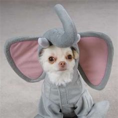 Elephant costume for your pet :-)