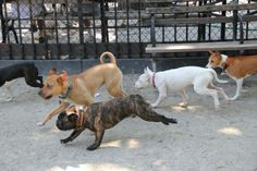 Property Management Strategies: How to Add the Perfect Dog Park